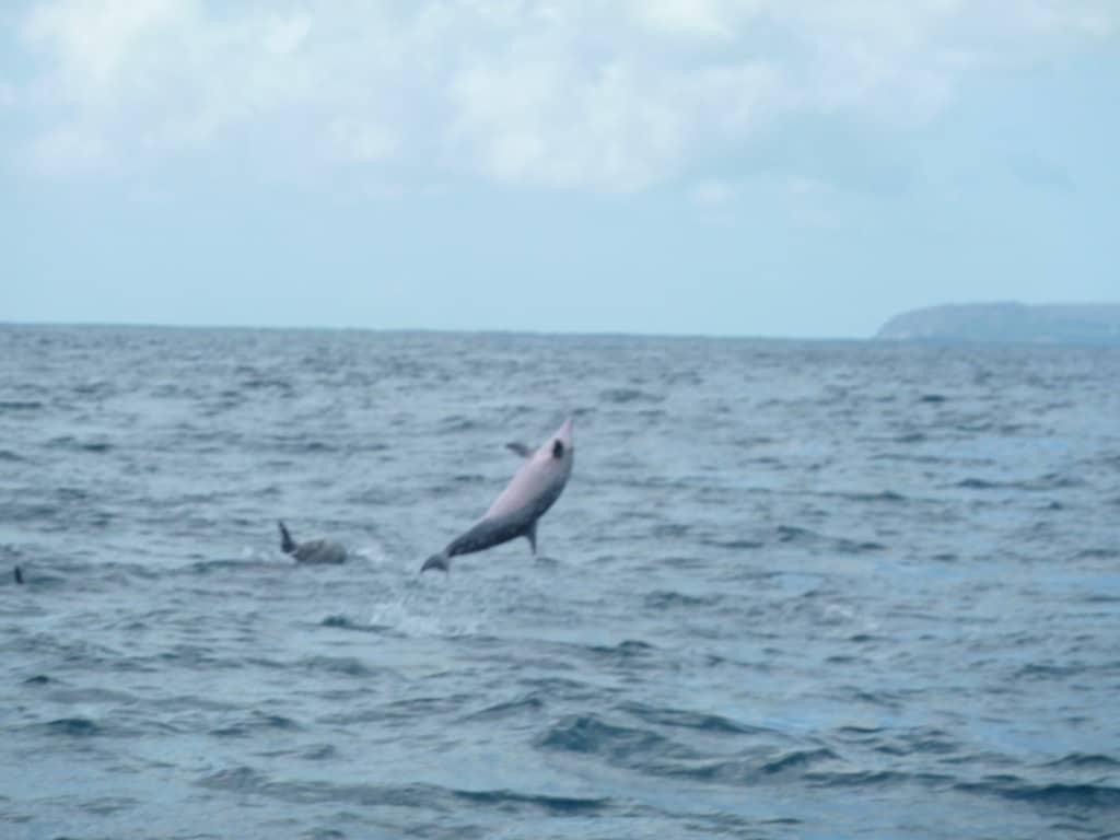 Un dauphin hors de l'eau