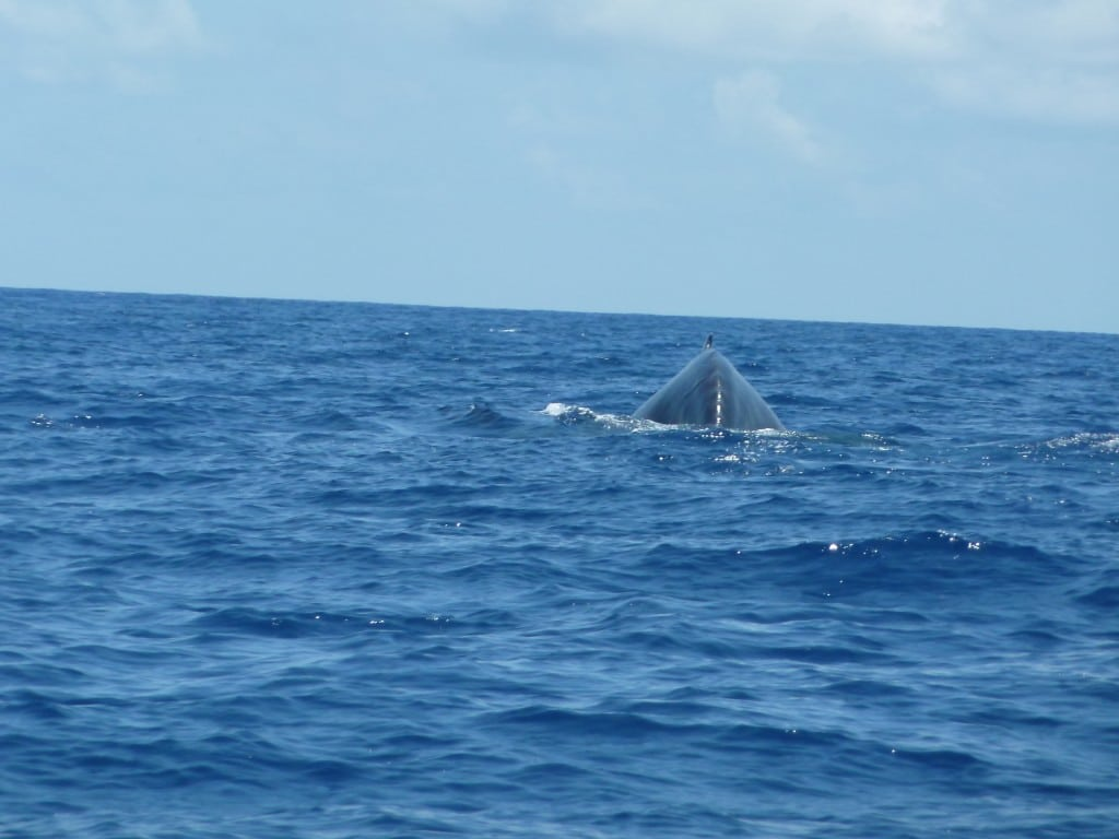 Dos de baleine