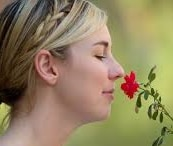 senteur rose